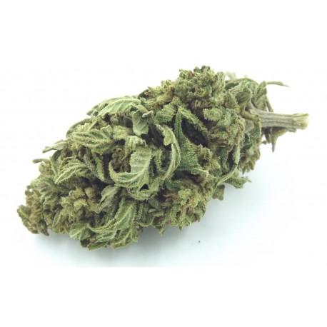 Mango Kush sachet 1 g, fleurs CBD